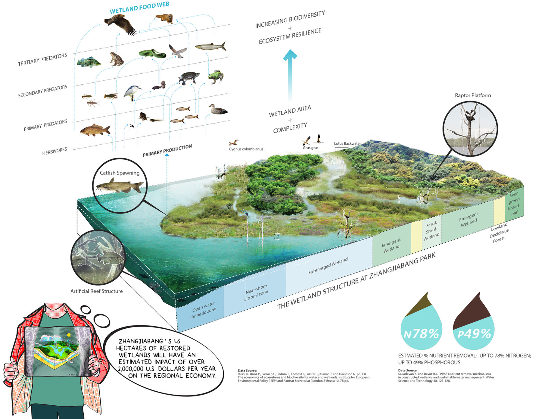Section perspective rendering of the park's wetland structure and marine life